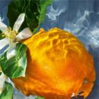 Aqua Allegoria Orange Soleia - 4372348J