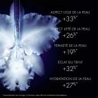 Orchidée Impériale - 43757473