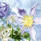 Aqua Allegoria Flora Salvaggia - 4372350X