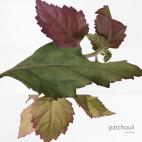 Elixir des Merveilles - Eau de Parfum - 47113035